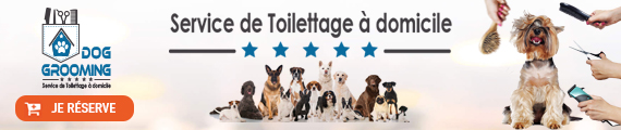 bannier-Grooming-dog-service-toilettage-beloccaison.jpg