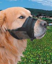 1569518990-muselie-re-petit-chien-small-muselie-re-chien-maroc-muselie-re-chien-berger-allemand-muselie-re-chien-malinois-muselie-re-chien-anti-aboiement-muselie-re-chien-beloccasion-animalerie-en-ligne.jpg