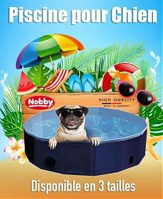 1594669036-pisicne-pour-chien-au-maroc-diposnible-chez-beloccasion2.jpg
