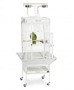 1611698559-cage-perroquet-maroc-calopsitte-animalerie-casablanca-en-ligne-cage-calopsitte-cage-calopsitte-tom-co-cage-pour-calopsitte-maroc-cage-pour-calopsitte-pas-cher-voliere-calopsitte-exterieur-cage-calopsitte-truffaut-maroc.jpg