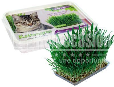 herbe a chat au maroc - beloccasion.com