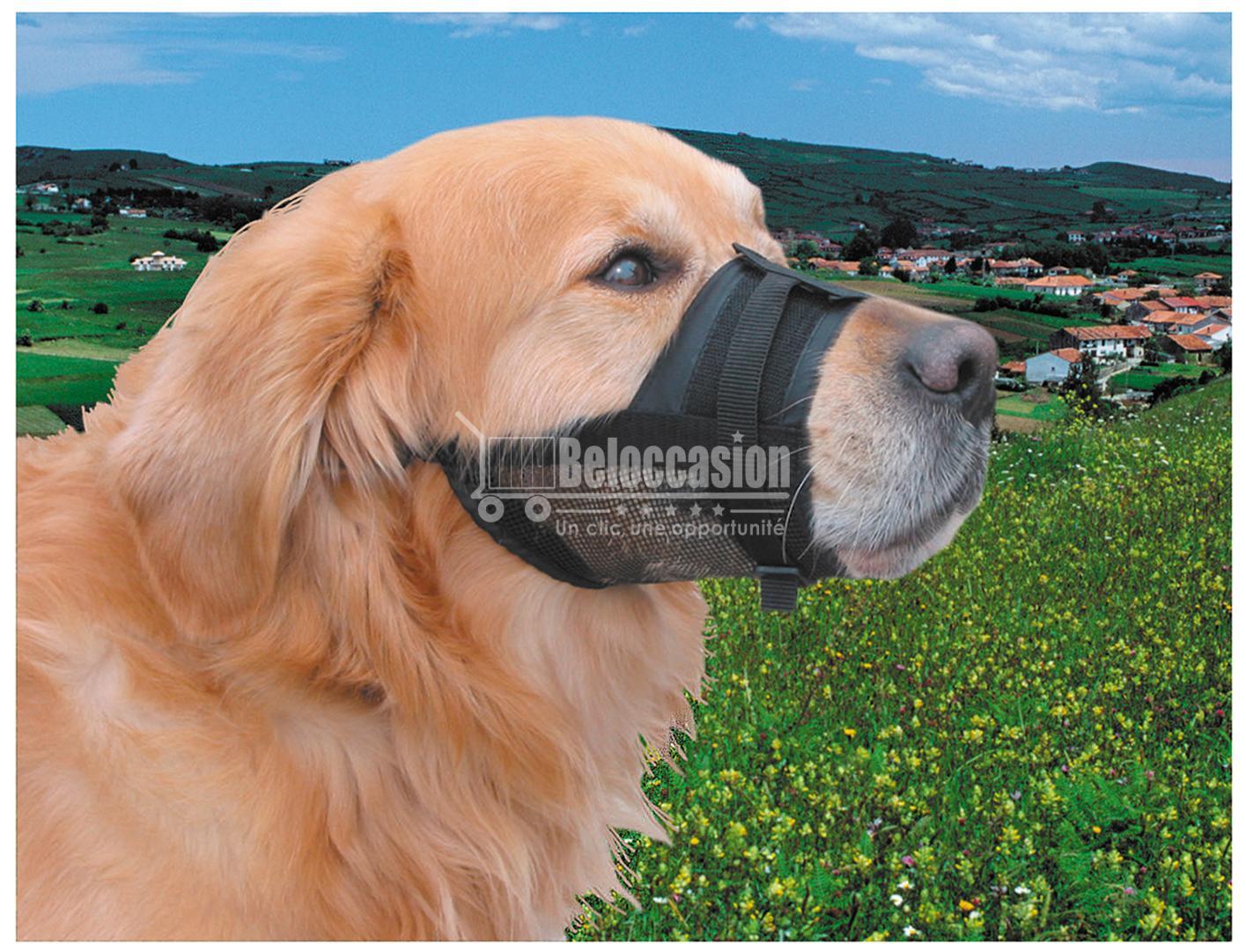muselière petit chien muselière chien maroc muselière chien berger allemand muselière chien malinois muselière chien anti aboiement muselière chien beloccasion maroc